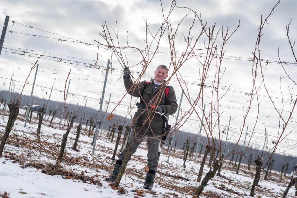 Weinbau Greilinger